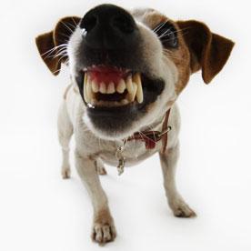 Классификация агрессивного поведения собак